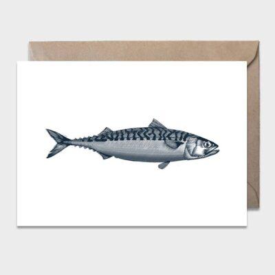 Postcard Mackerel 10-pack