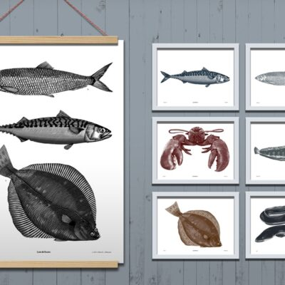 Poster Fish Taxonomy 4-pack